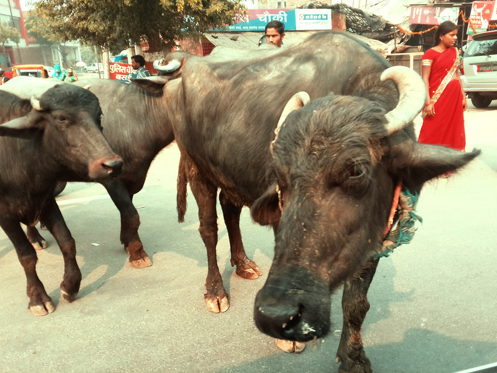 Typical traffic jam in Agra.