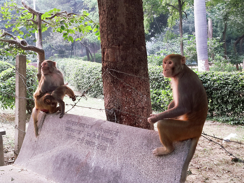 Monkeys rest on a park bench near Taj Mahal.