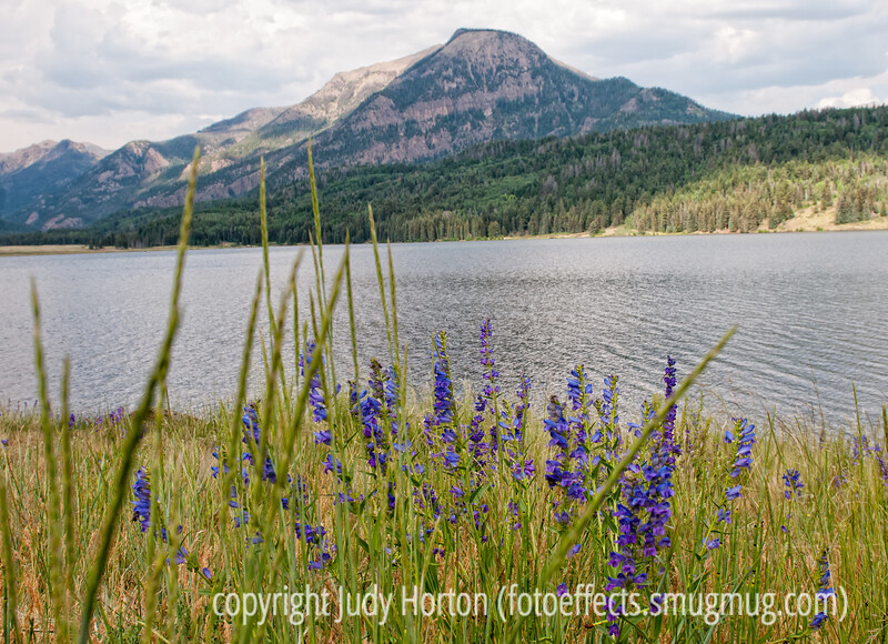 A view of Sugarloaf Mt. from Teal Campground in southern Colorado; the lake is Williams Reservoir; best viewed in the largest sizes; the flowers are penstemon
