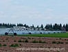 Irrigating a field near Alamosa, Colorado