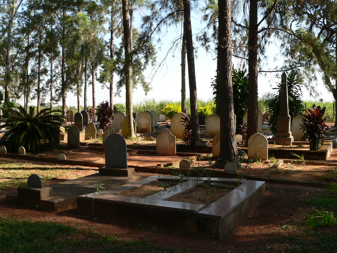 A tangle of pine and palm, the tombstones rest in relative shadow and calm.