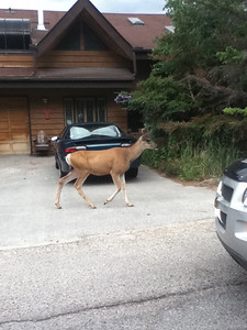 Just wandering around the streets of Banff