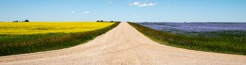 Canola (L) and Flax (R) in Saskatchewan, Canada