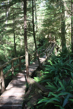 Day 12 - Tofino Rainforest Trail