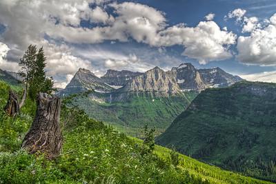 Mt Oberlin tree stump