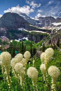 Bear Grass Grinell Glacier hike