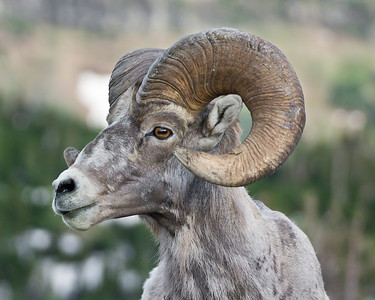 Large horns