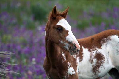 Horses outside Calgary