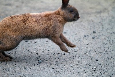 Bunny 3. Run rabbit run!
