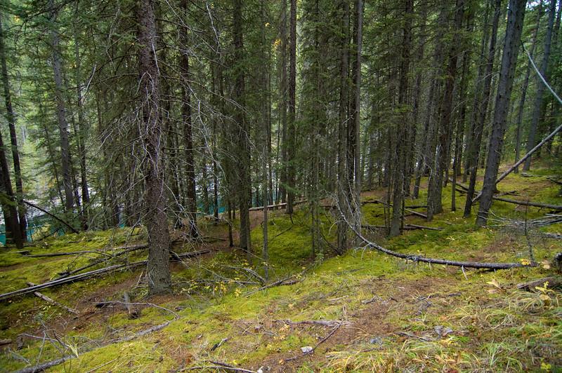 Banff National Park - Rocky Mountains - Lake Milwaukee