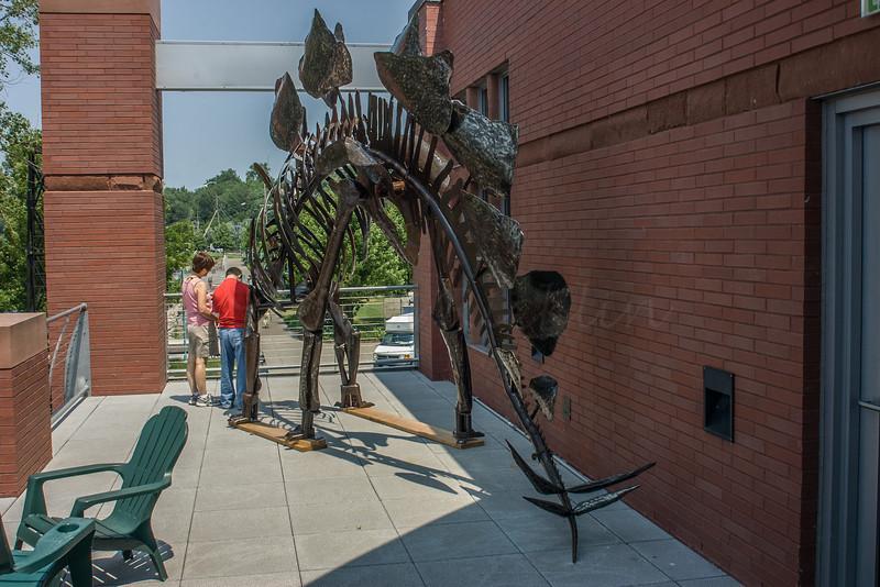 Stegosaurus bone model, Echo Museum.