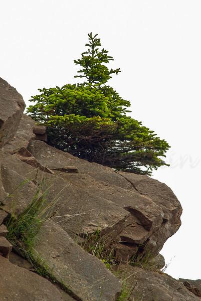 Sight - Cabot Trail Cape Breton, Nova Scotia, Can