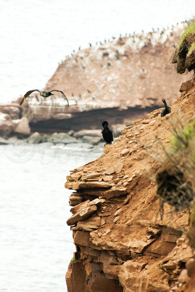 Cormorant haven/cliffs