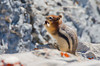 Squirrel living up by the Sulphur Mountain Cosmic Ray Station