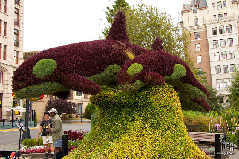 Orca topiary at the Fairmont Empress, Victoria
