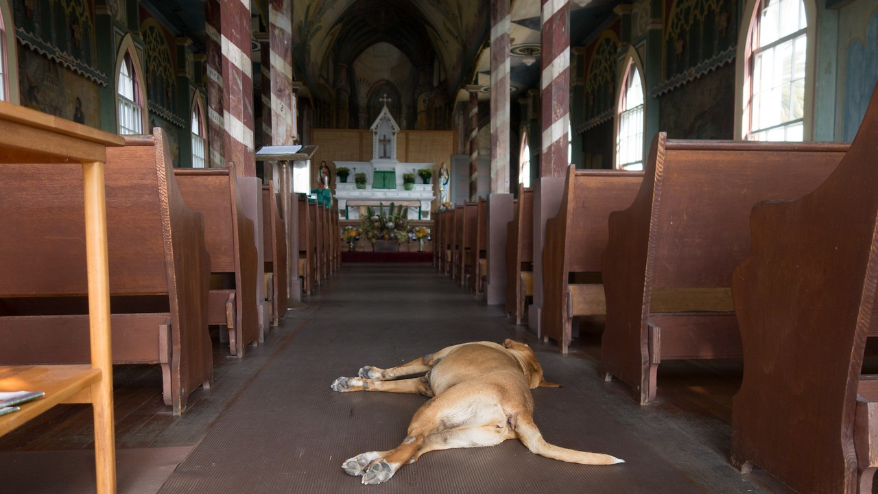 Benign sleeping dog (Catholic)