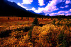 CAN-Bow Pass, Banff NP, Alberta-3009-25