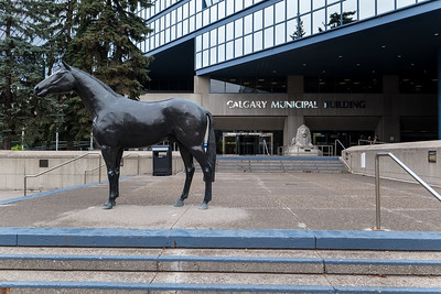 Outside the Calgary Municipal Building