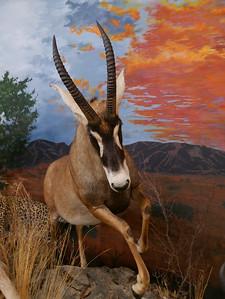 "The ""Chester Mjolsness World of Wildlife"" Exhibit"