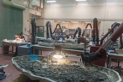 Fossil Workshop
