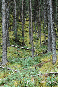 Trees in Kananaskis Country in Alberta's Rocky Mountains. © Rob Huntley