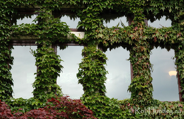 Ivy covered windows of The Empress Hotel in Victoria, British Columbia. © Rob Huntley