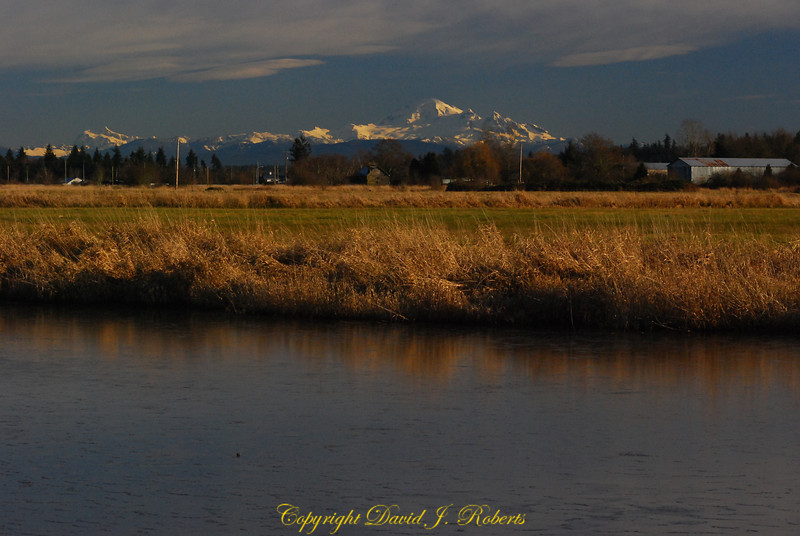 Serpentine River Natural Area near Delta BC with Mount Baker in the background.