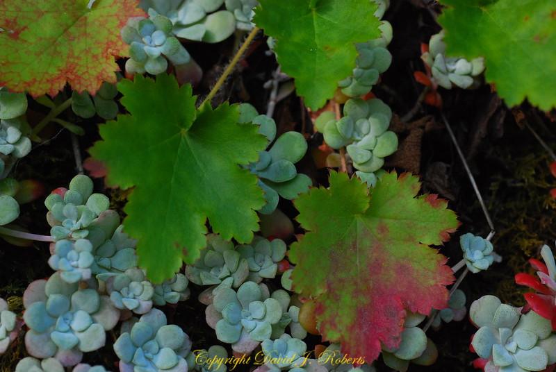 Succulents & Leaves Descanso Bay Gabriola Island