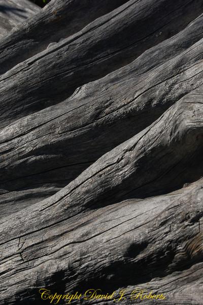 Old log, Sooke Bay BC