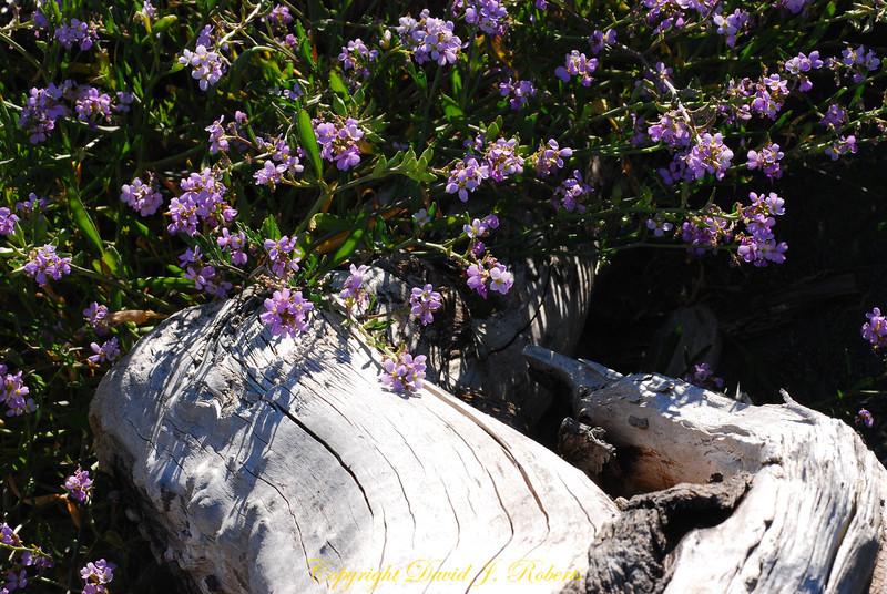 flowers and log near Sooke Bay BC