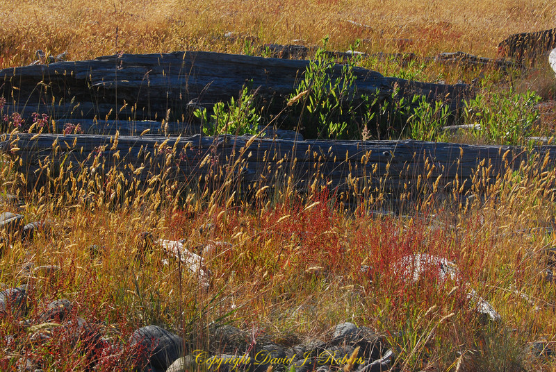 Grasses on Spit near Sooke Bay BC