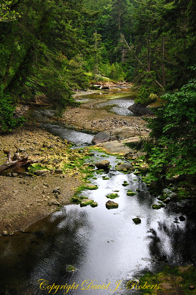 Creek near Galloping Goose Trail, Sooke BC