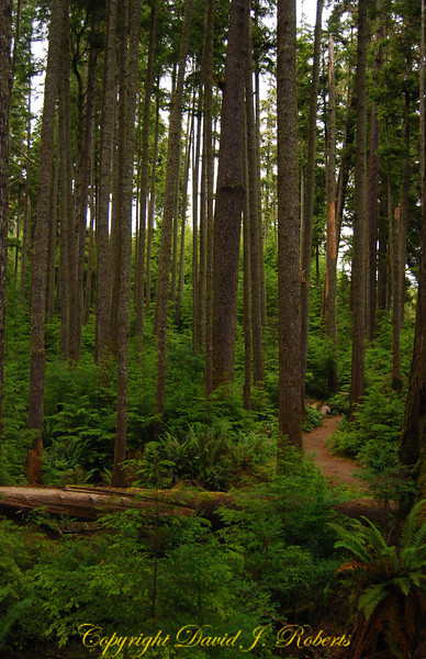 Coastal forest and trail, China Beach, Juan de Fuca Prov Park