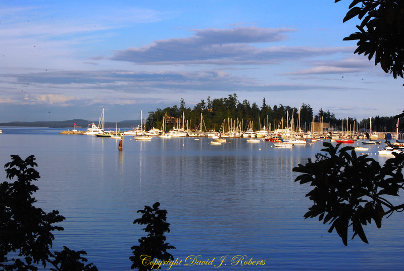 Swartz Bay Marina at sunset
