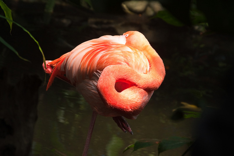 """A folded-up flamingo at the <a href=""""http://www.butterflygardens.com/"""">Butterfly Gardens</a>, Victoria, BC"""