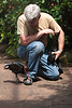 "This is Spike, the Peruvian Puna Ibis. We've met her before, and she always has to check out Dennis' shoes. <a href=""http://www.butterflygardens.com/"">Butterfly Gardens</a>, Victoria, BC"