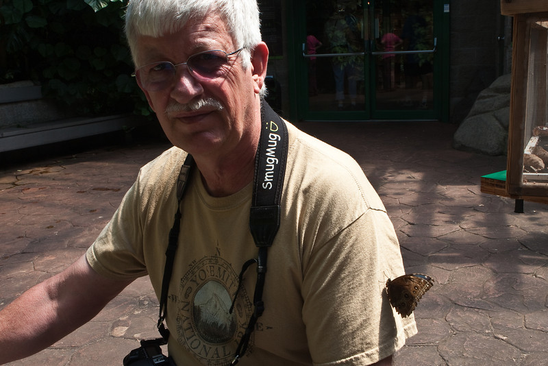 """A wider shot of the Blue Morpho (morpho menelaus) on Dennis' shirt at the <a href=""""http://www.butterflygardens.com/"""">Butterfly Gardens</a>, Victoria, BC"""