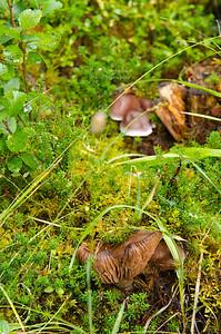 Mushrooms in Canada