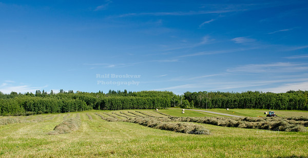 Hay harvest in Alberta, Canada