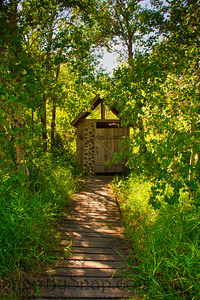 An Outhouse in a Forest
