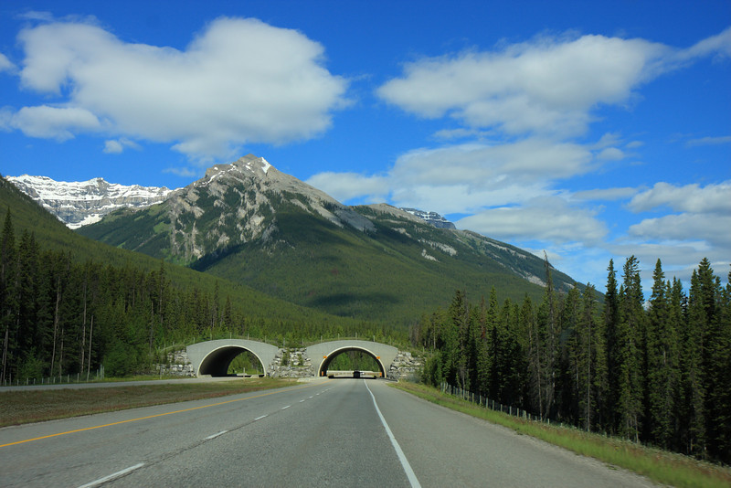 Highway 1 towards Lake Louise