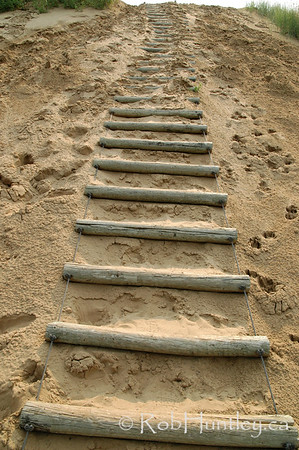 Sand ladder on a trail on the Spirit SandsTrail, Spruce Woods Provincial Park, Manitoba. © 2006 Rob Huntley