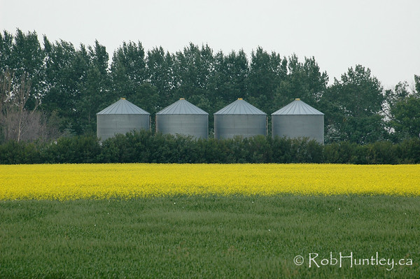 Grain storage and canola fields in Manitoba.