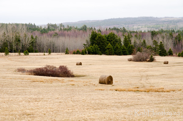 Hay field in spring, New Brunswick. © Rob Huntley