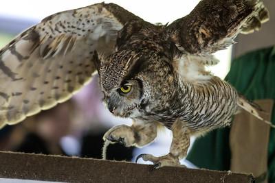 Birds Of Prey Show, Canadian Raptor Conservancy, Niagara Falls