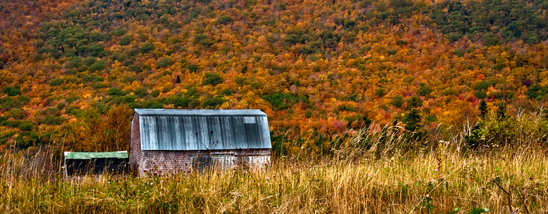 Fall color near Meat Cove: Cape Breton Highlands National Park, NS