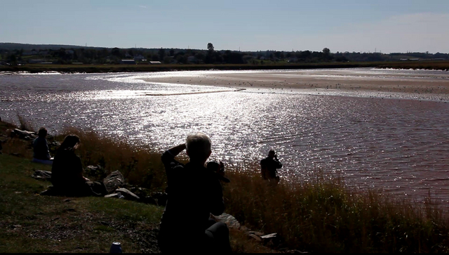 Video of Bay of Fundy Tidal Bore at Truro, NS