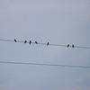 <b>Selkirk Provincial Park 07 30 2006_MG_8169</b><br>