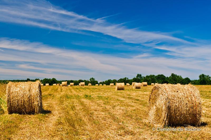 Bales of Hay in Vineland, Niagara,Ontario,Canada