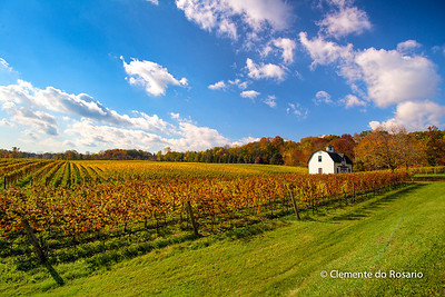 Autumn in the Niagara Wine Region, Niagara,Ontario, Canada